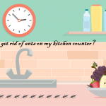 How Do I Get Rid of Ants on My Kitchen Counter? (8 Life Saving Hacks!)