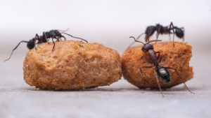 How Do I Get Rid of Ants on My Kitchen Counter