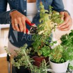 Why Kitchen Gardening Is Important?