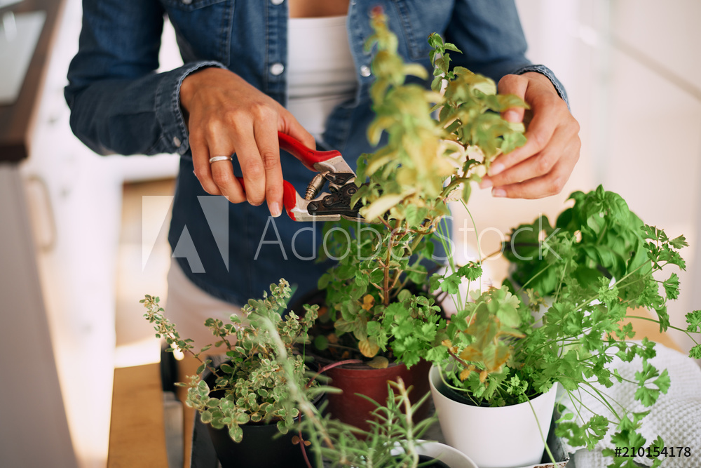 Why Kitchen Gardening Is Important